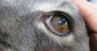 Заболевания глаз у кошек: симптомы, профилактика, лечение, фото